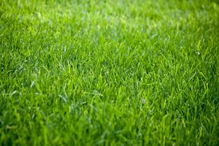 Lexington's Premier Lawn Care Service - Lawn Seeding 1